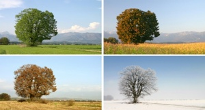 Quatre saisons spirituelles